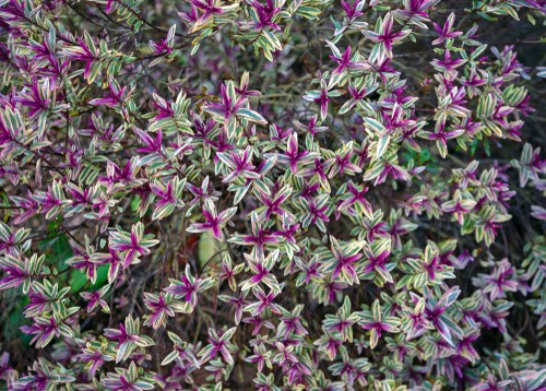 When to propagate hebes