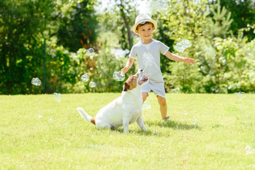 choosing the right grass seed for different situations such as a lawn that is used by children and pets
