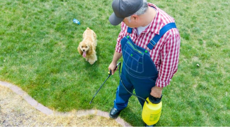Top 6 Best pet friendly weed killers  – Keep pets off until treated area has dried