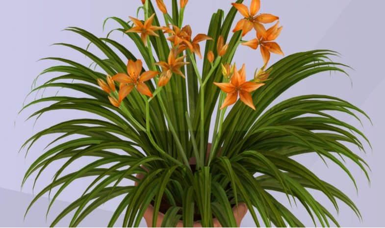 Growing and caring for daylilies in pots and containers in UK