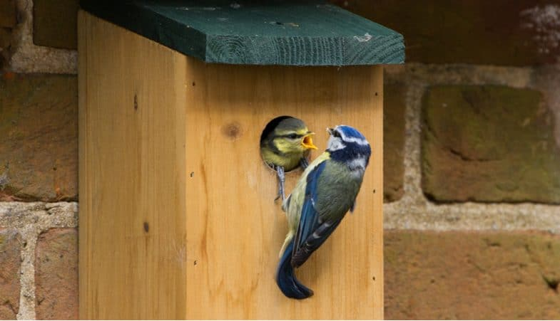Top 5 best bird box cameras for getting a unique look into the life of wild birds in your own garden