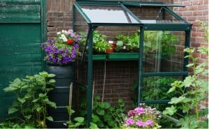 In this guide, we look at some of the best mini greenhouses from affordable starter models to premium reinforced glass models for the more serious gardener.