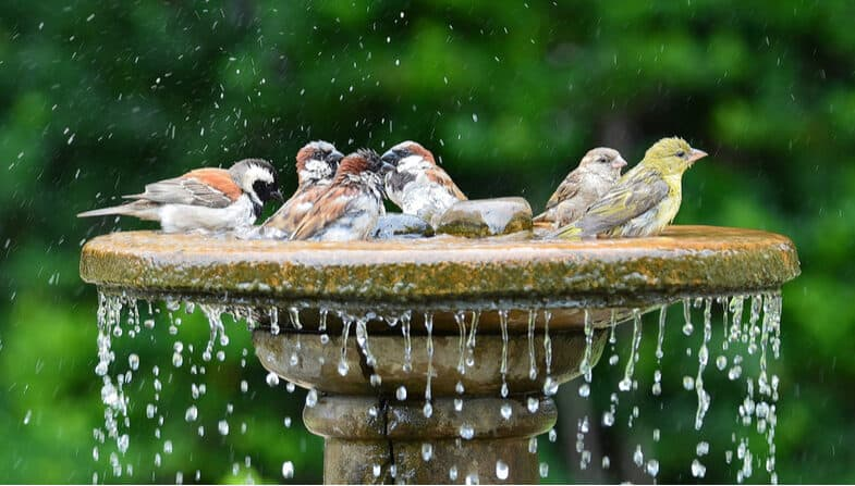 Top 8 Best Bird Baths with some of our favourite picks